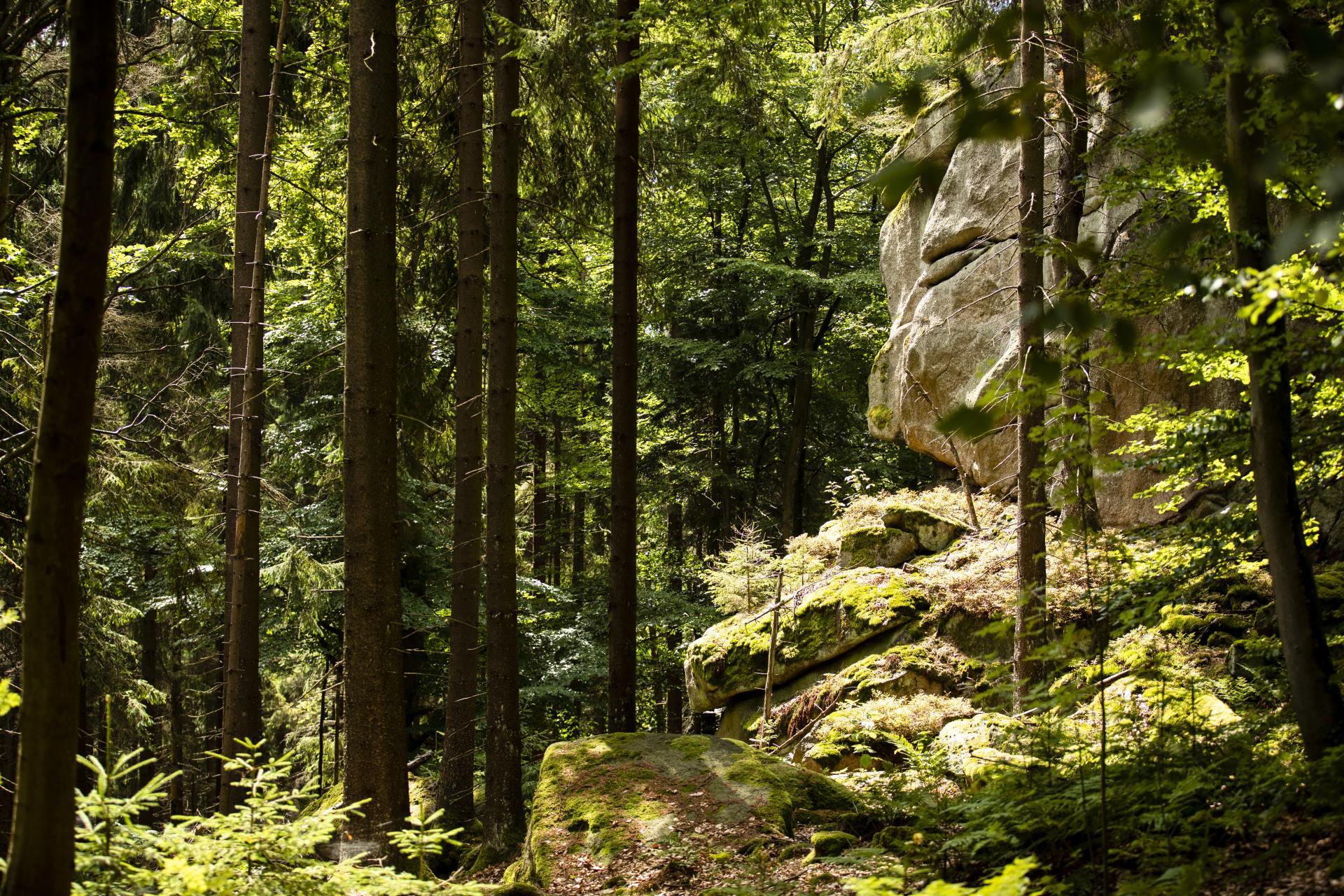Steinwälder Heimat